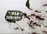أسرار تحركات النمل