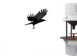 توظيف الغربان