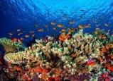 الاحتباس الحراري قد يفيد الشعاب المرجانية