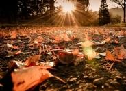 الطقس: أجواء خريفية دافئة وإنخفاض طفيف على درجات الحرارة