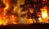 حريق هائلة تلتهم اكثر من 2000 دونم في طولكرم