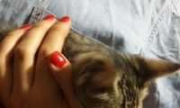 زيمر: ساعدوني في العثور على قطتي!
