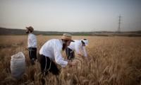 هارتس:مستوطنون يؤجورن اراضهم للفلسطنيون