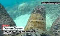 فيديو: هذا ما ستراه في قاع البحر إن كنت سلحفاة