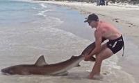 فيديو: شاب يصطاد سمكة قرش طولها 2.5 متراً في أستراليا
