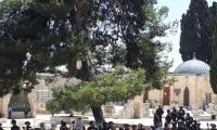 مواجهات بين الشرطة والمصلين في باحات المسجد الاقصى عقب صلاة الجمعة