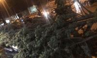 سقوط اشجار على سيارات في مناطق عديدة بفعل العاصفة