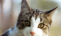 أكبر قط معمر بالعالم عمره 26 عاما