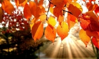 فلكياً ... الجمعة أول ايام فصل الخريف