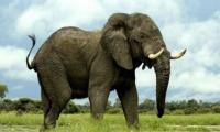 نجم تركي شهير يشتري فيلاً لطفله بسعر خيالي -صور