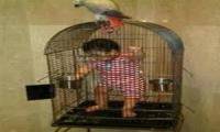 بائع عصافير يحبس طفله في قفص