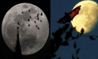 القمر يتضخم ويطل الأحد