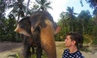 فيل يستخدم خرطومه لالتقاط صورة